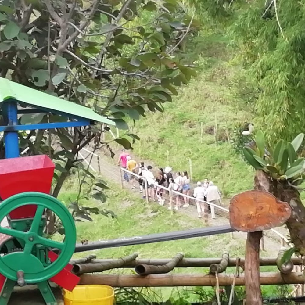 acacias_coffee_farm_tour